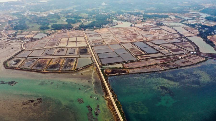 廣西欽州:蝦塘復工