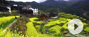 梯田,村寨,油菜花(hua)……春天真(zhen)的(de)可以這麼美