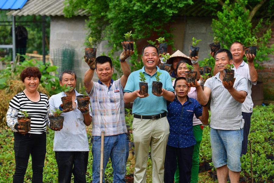 廣西鹿寨:産業興旺鞏固脫貧成果