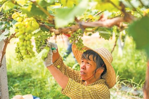 梧州市大力發展特色優勢産業