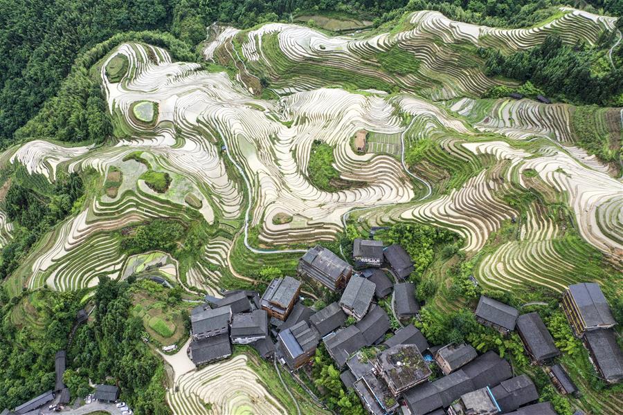 廣西龍勝:夏日龍脊景色迷人