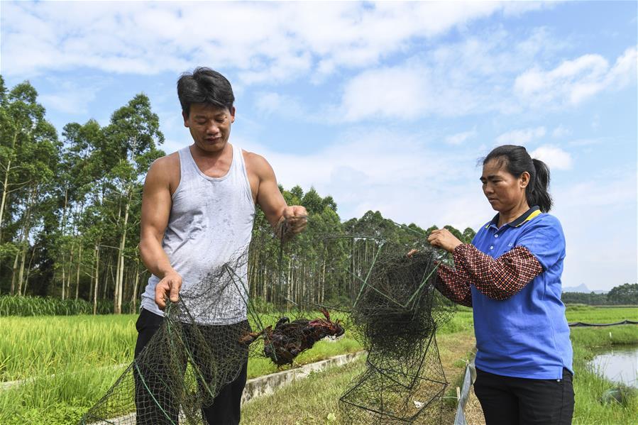 廣西武宣:稻蝦輪作助農增收