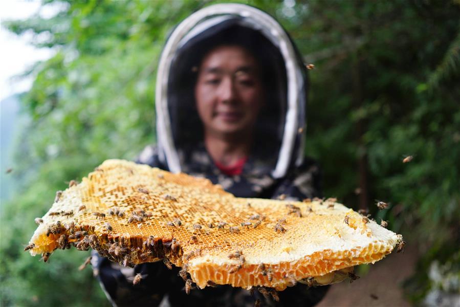廣西龍勝:苗山深處養蜂忙