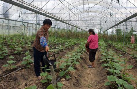 廣西梧州:品牌蔬菜受寵