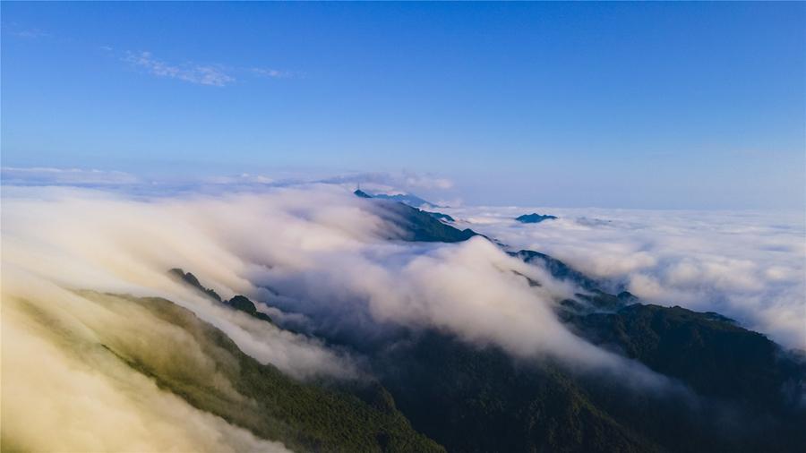 廣西大明山:秋雲成海 蔚為壯觀