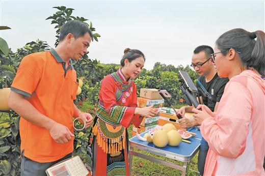 河池郵政開展直播活動助力環江紅心香柚銷售