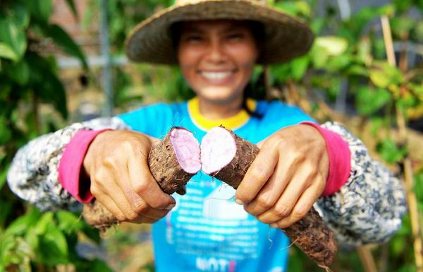 廣西岑溪農民大興特色果蔬種植
