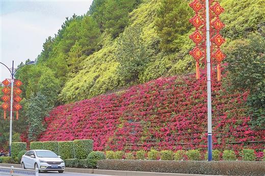 梧州市開展綠化提質工程