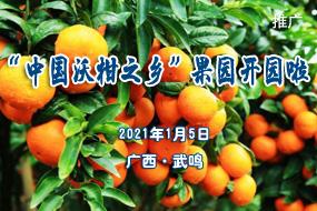 """""""中國沃柑之鄉""""果園開園"""