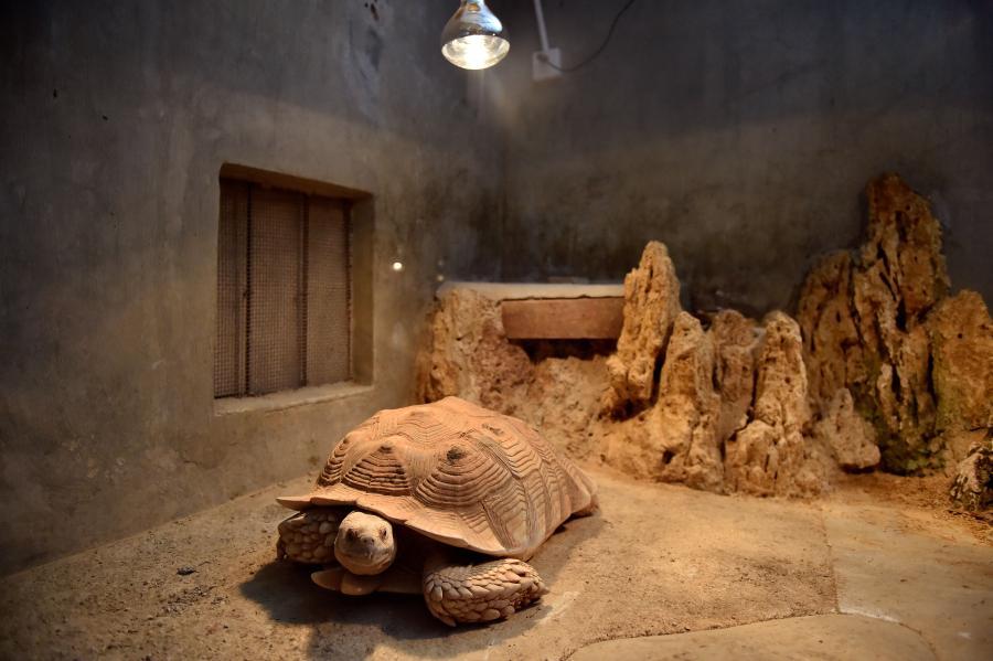 南寧市動物園幫助動物溫暖越冬