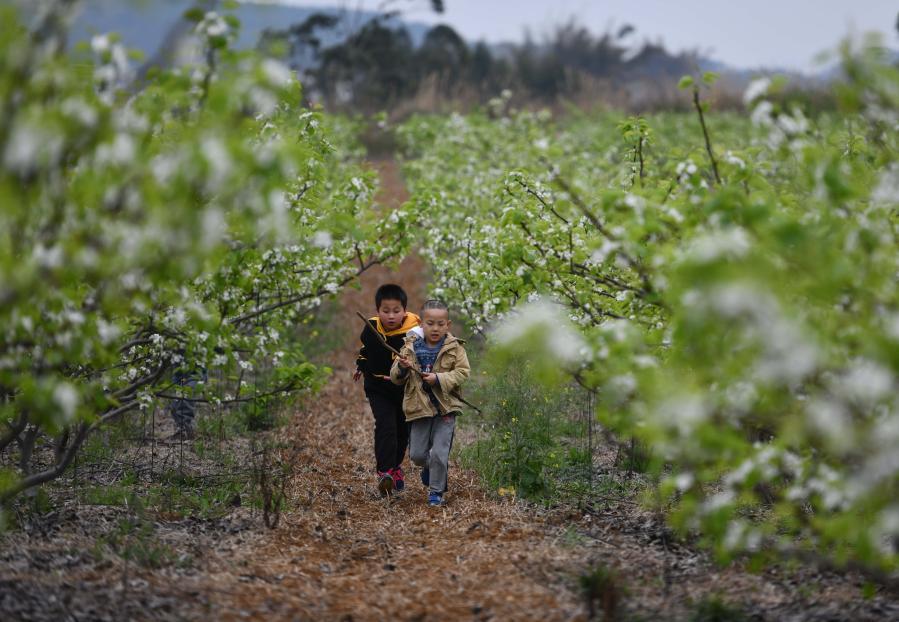 廣西柳州:鄉村播種新希望