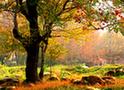 十萬大山國家森林公園