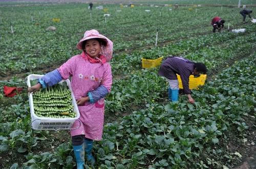 廣西蒙山:日均供港蔬菜1.5萬公斤