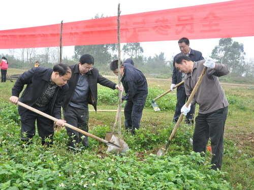 自治區國稅局到上林開展新春植樹活動